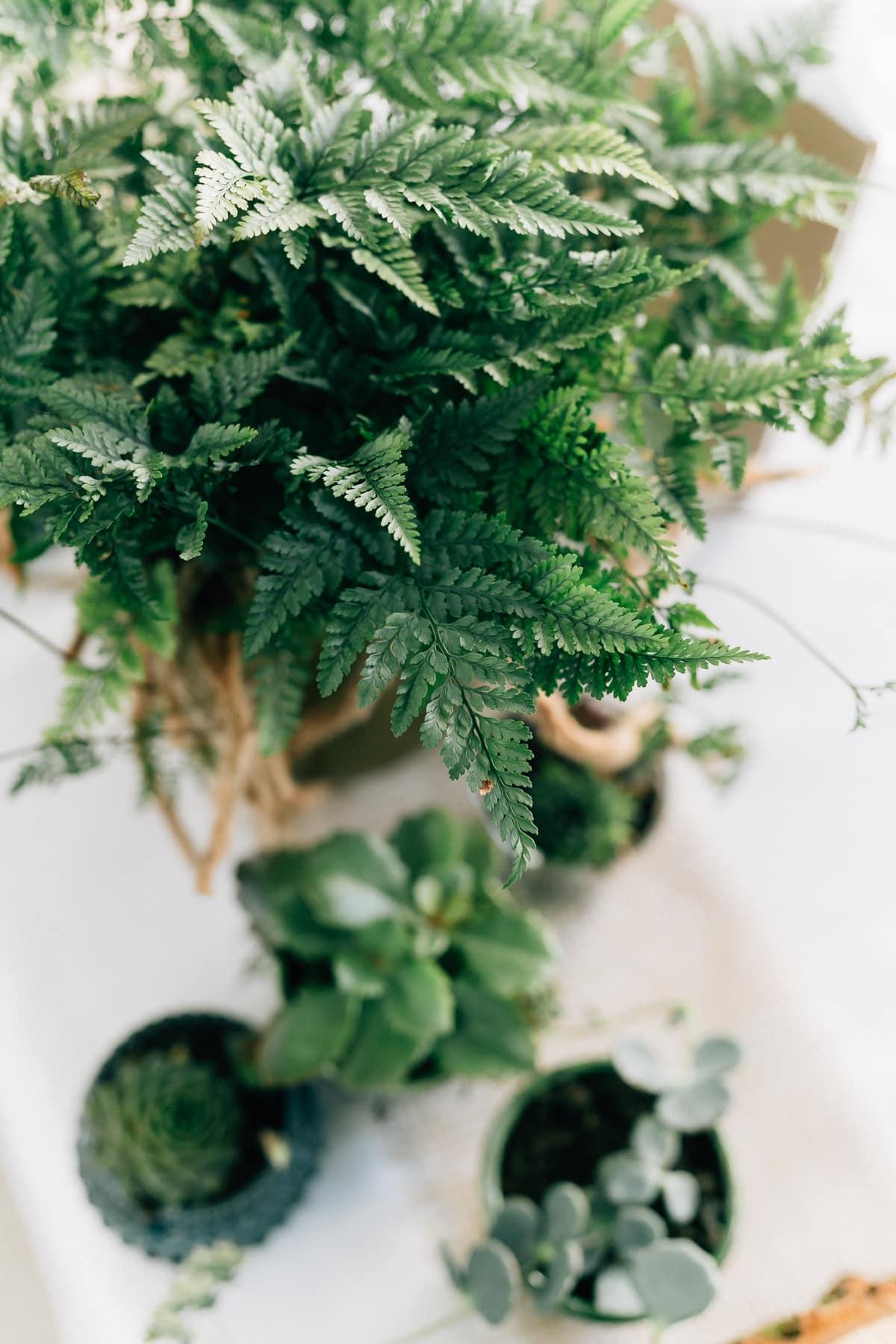 Hochzeit | Kitzmantelfabrik | Vroni & Max